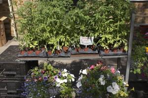 Adam & Indy Berthoud Special Plants Ltd
